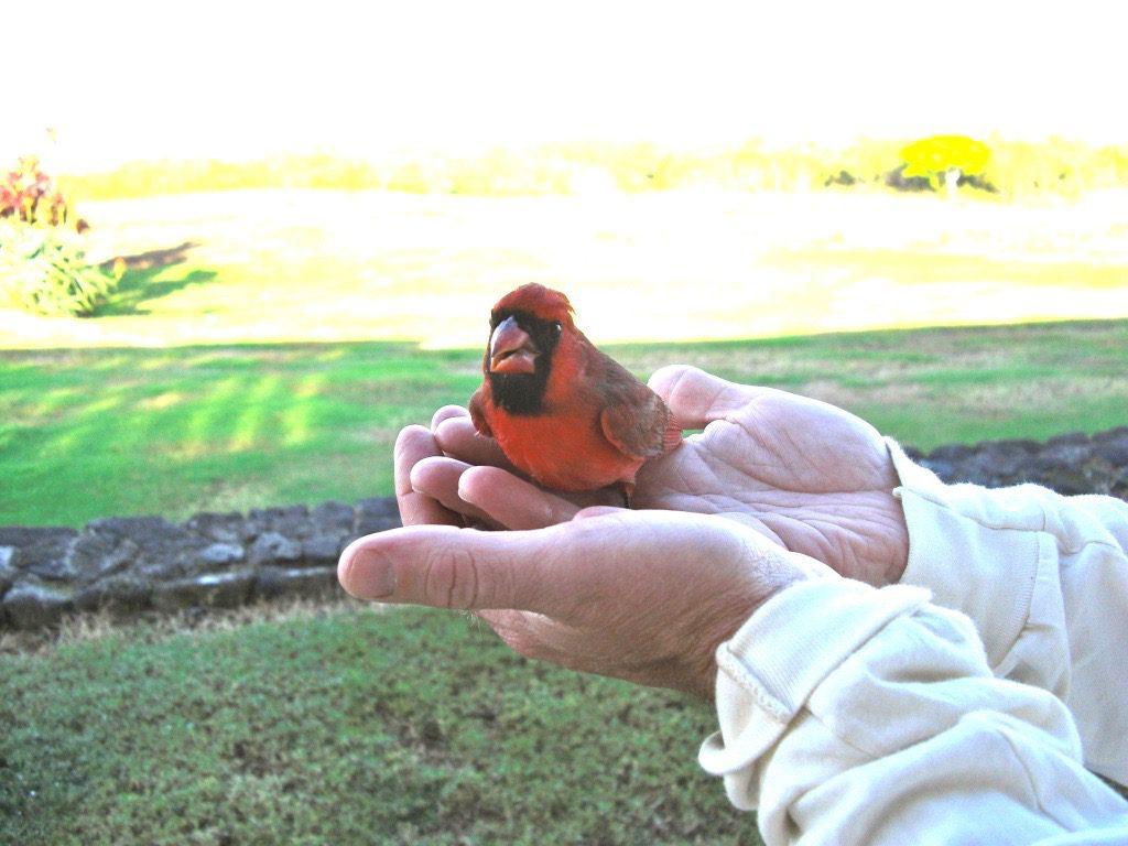 Cardinal Horizon BnB Kona Big Island