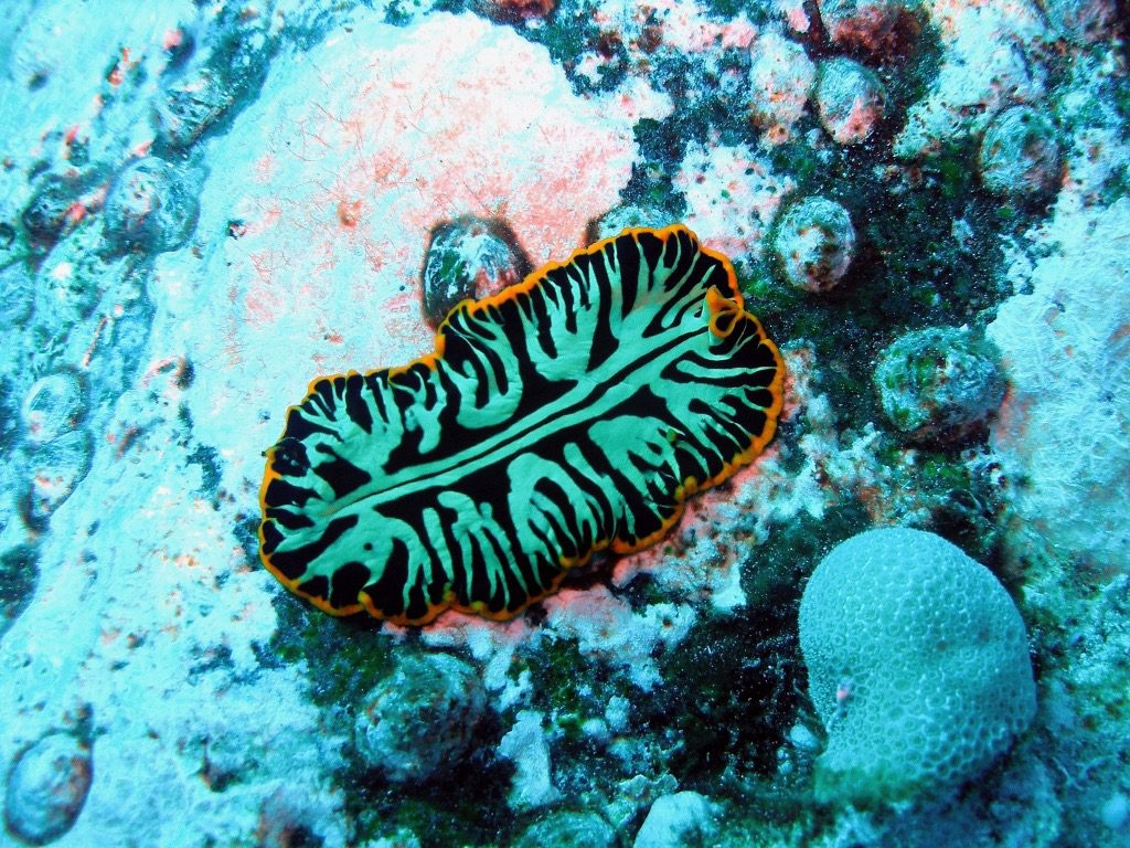 Nudibranch Big Island Horizon Guest House