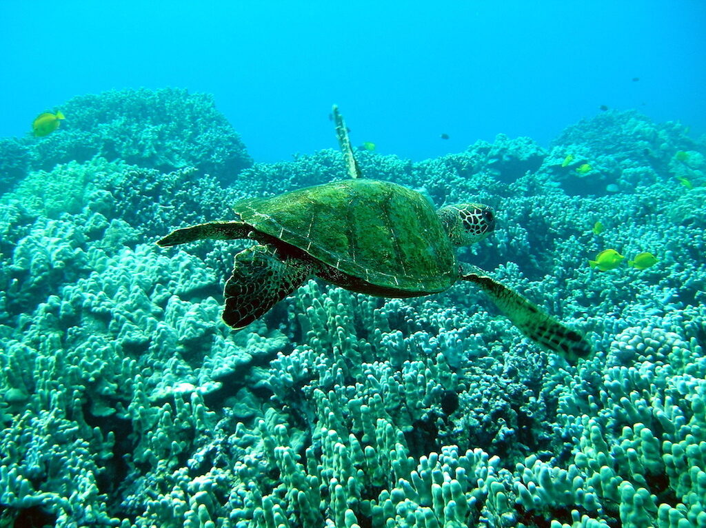 Green Turtle Honaunau Big Island Horizon BnB