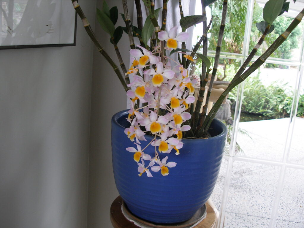 Orchids Kona Big Island Hawaii Horizon Guest House