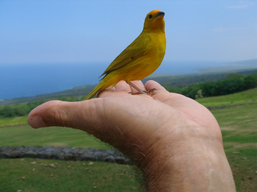 Saffron Finch Horizon Guest House