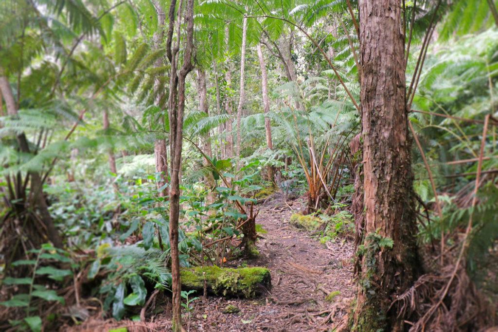 Makuala O'Oma Trail Kona Hawaii