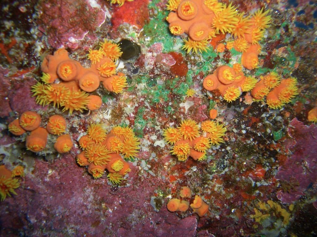 Soft Coral Kona Hawaii