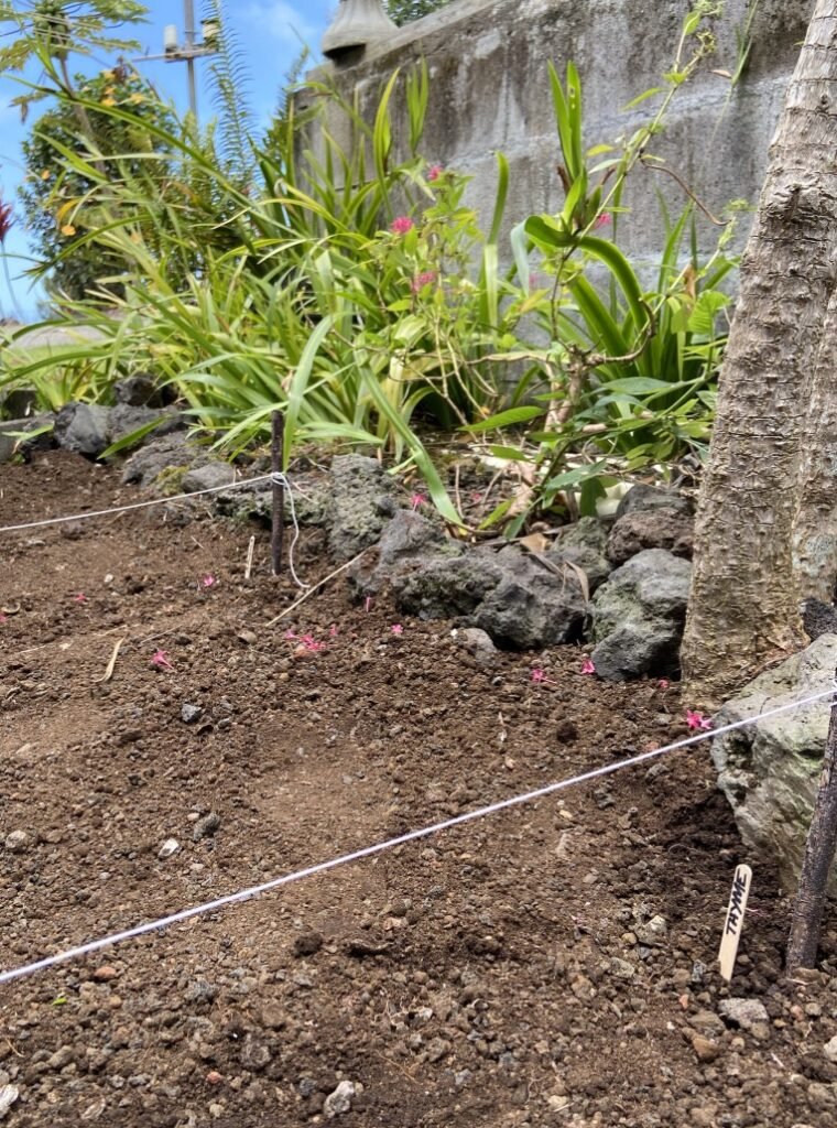 Garden herbs Big Island Horizon