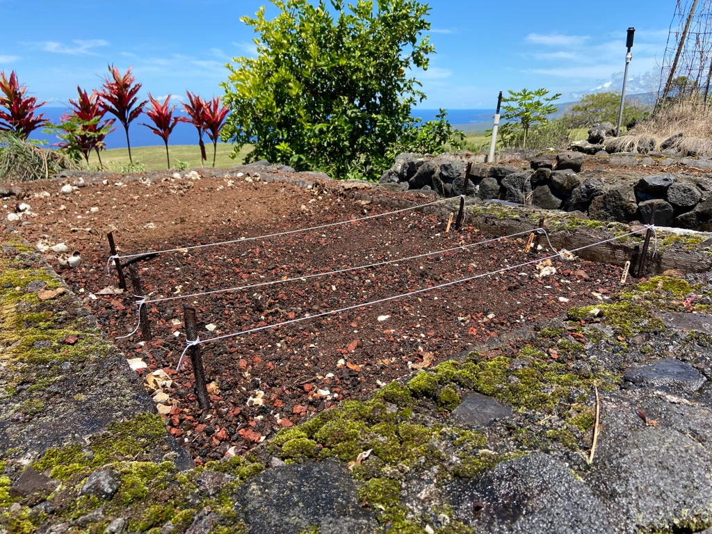 Springtime gardening on the Big Island
