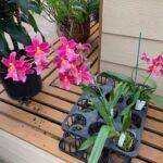 Akatsuka Orchid Horizon Guest House Hawaii