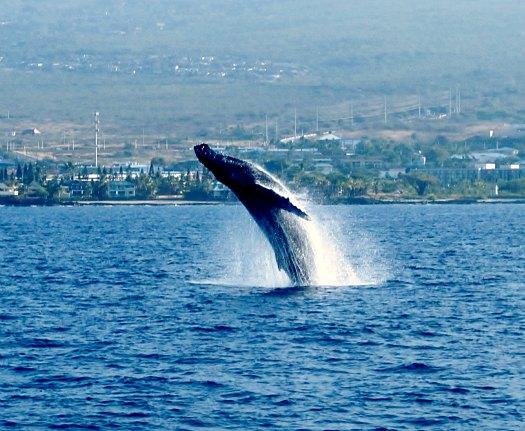 3 Humpback Whale