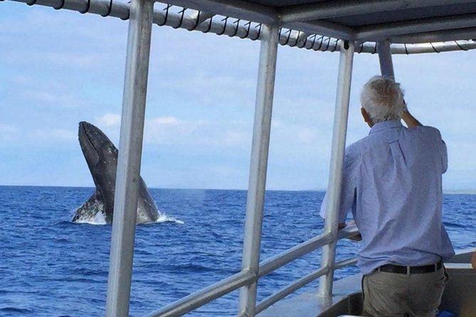 4 Humpback Whale