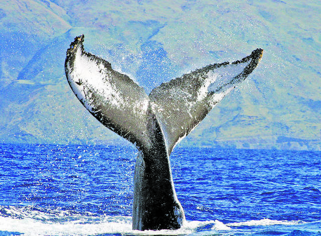 5 Humpback Whale