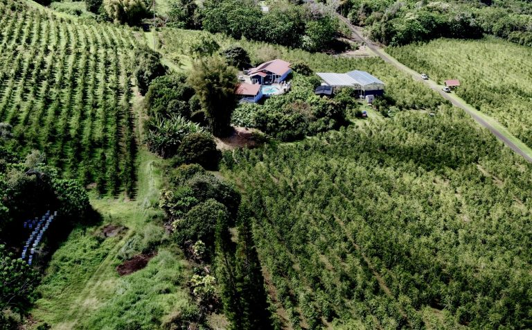 100_Kona_Coffee_Heavenly_Hawaiian_2